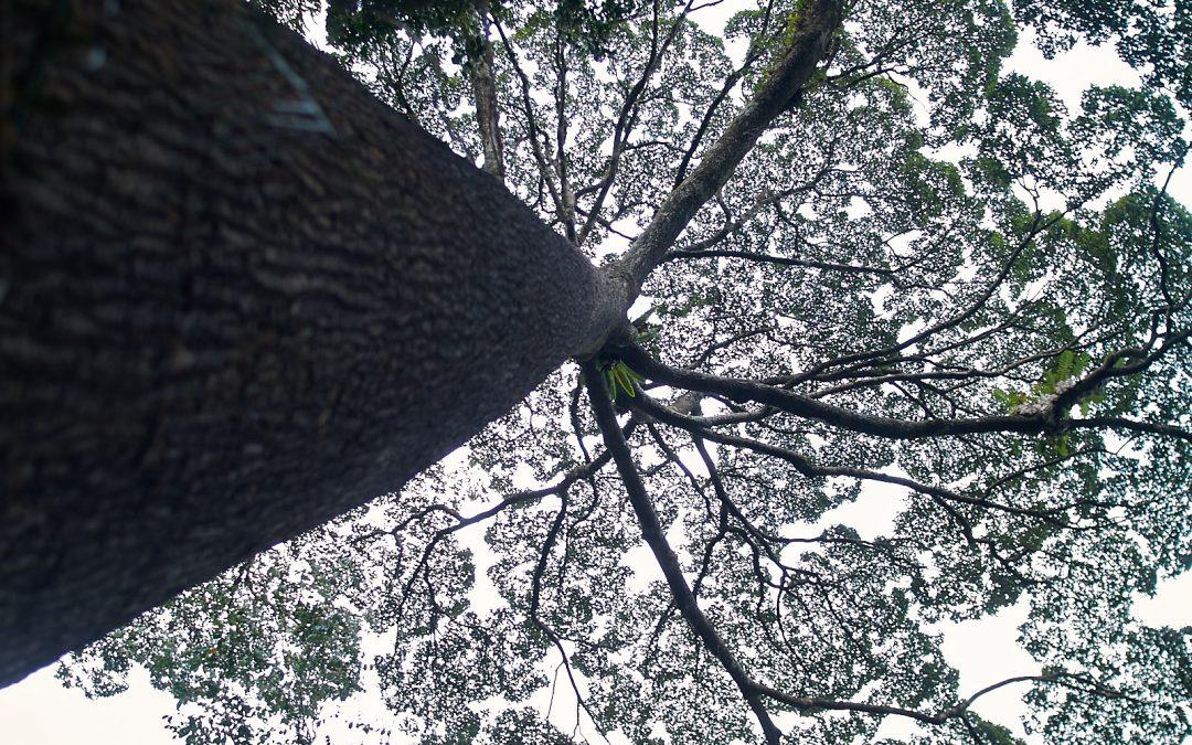 The Overstory – Booker-shortlisteren som gikk seg vill i skogen